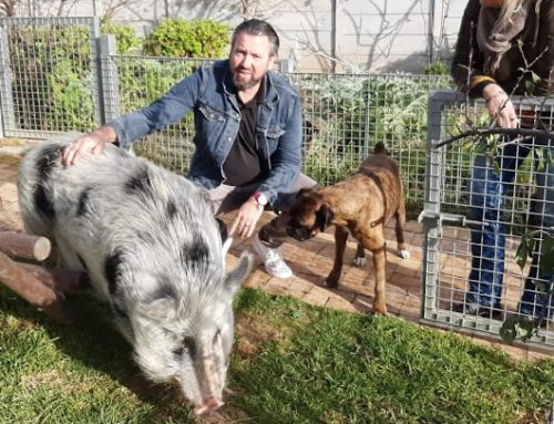 Chefs and their Pets – Bertus Basson
